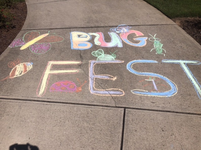 Colorful BugFest in Chalk