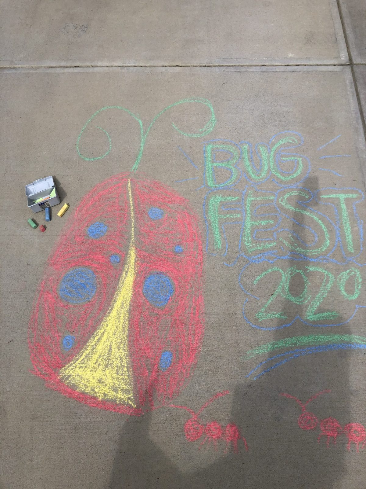 chalk ladybug and bugfest 2020