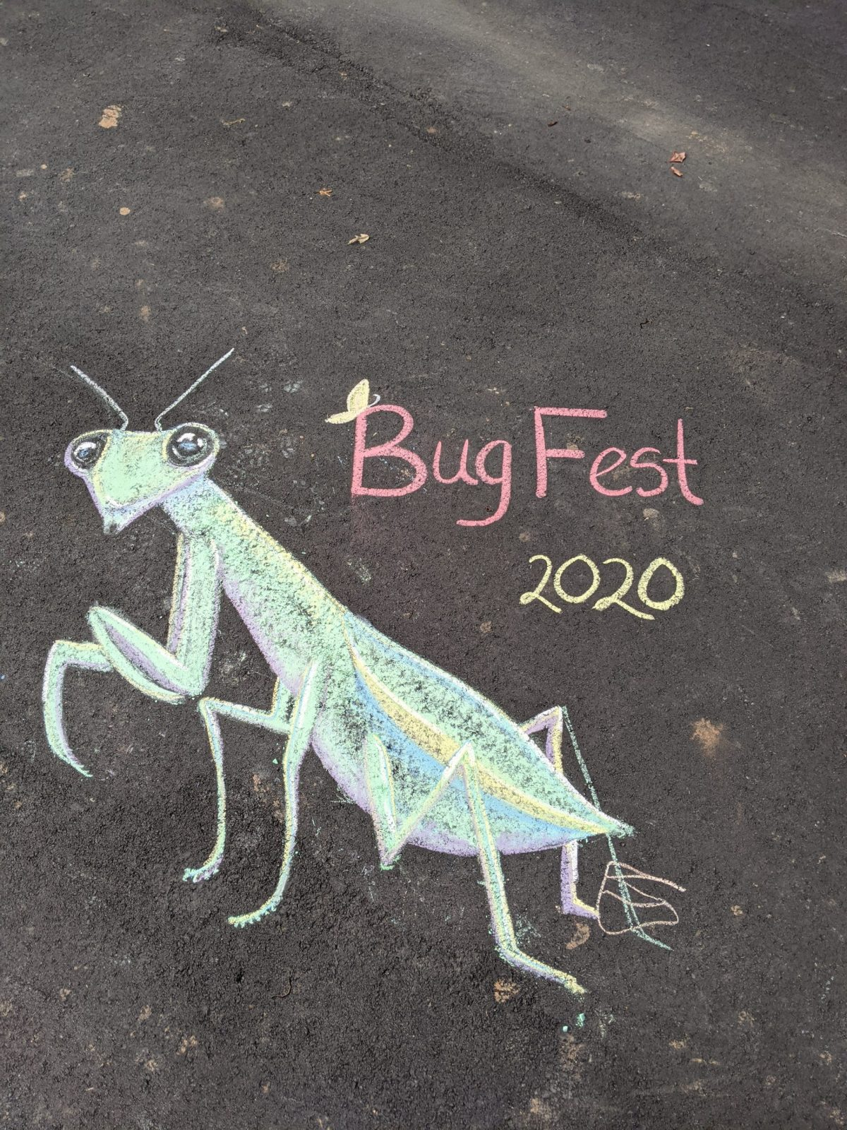 an excellent chalk praying mantis and bugfest 2020