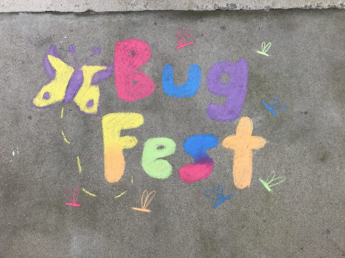 A colorful BugFest in chalk with a butterfly