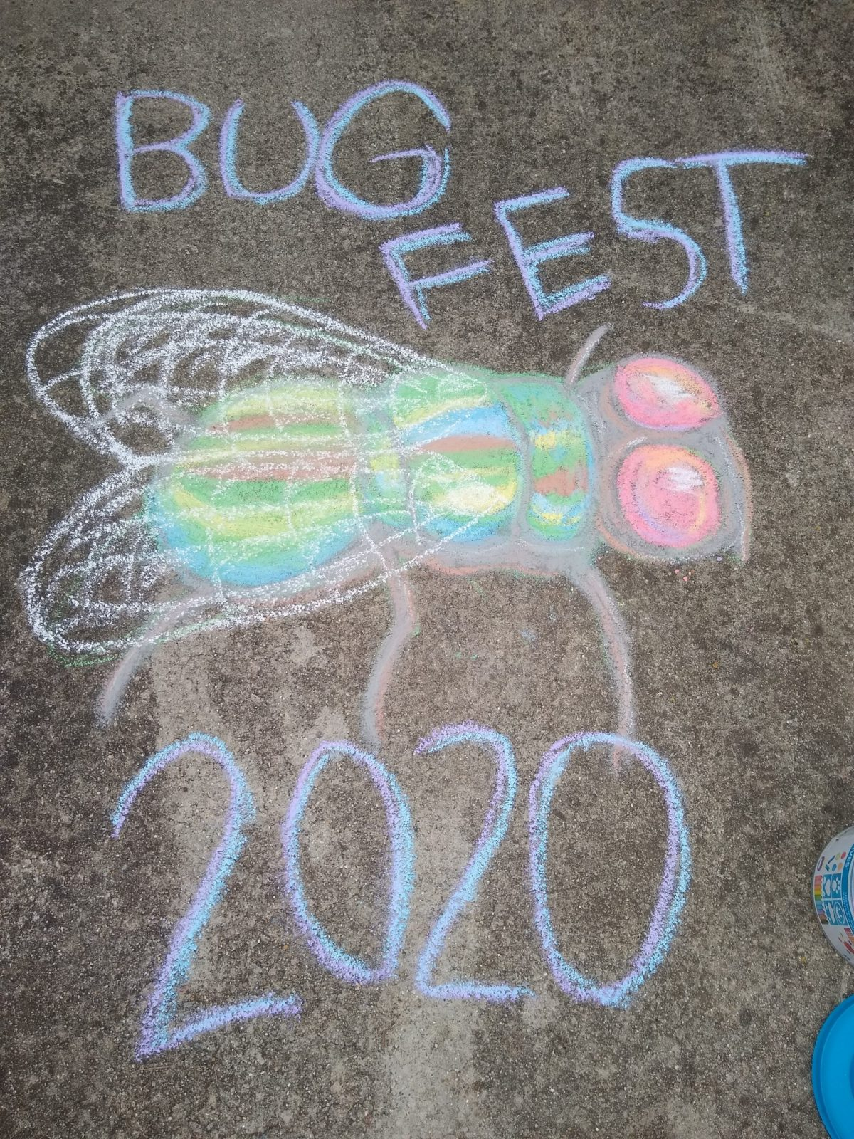 Bugfest and a colorful chalk fly