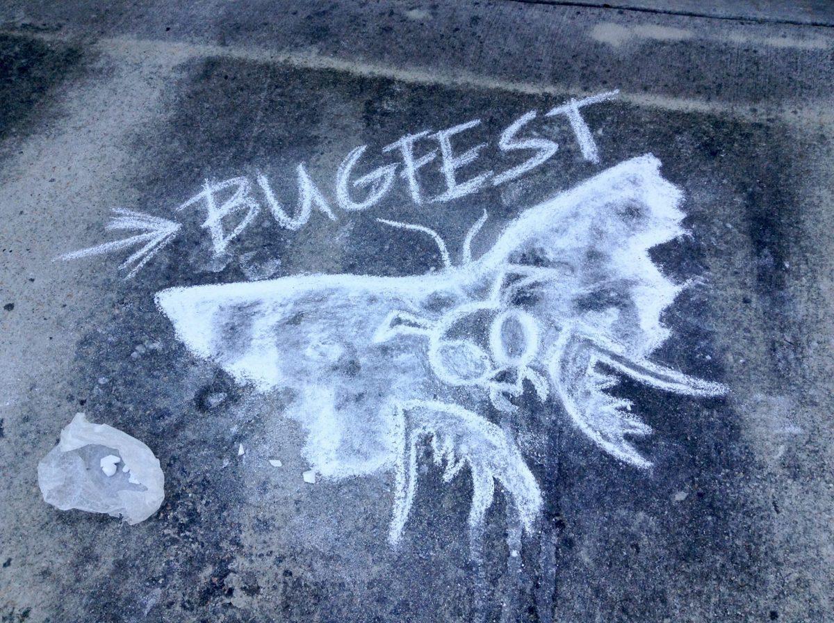 A BugFest moth