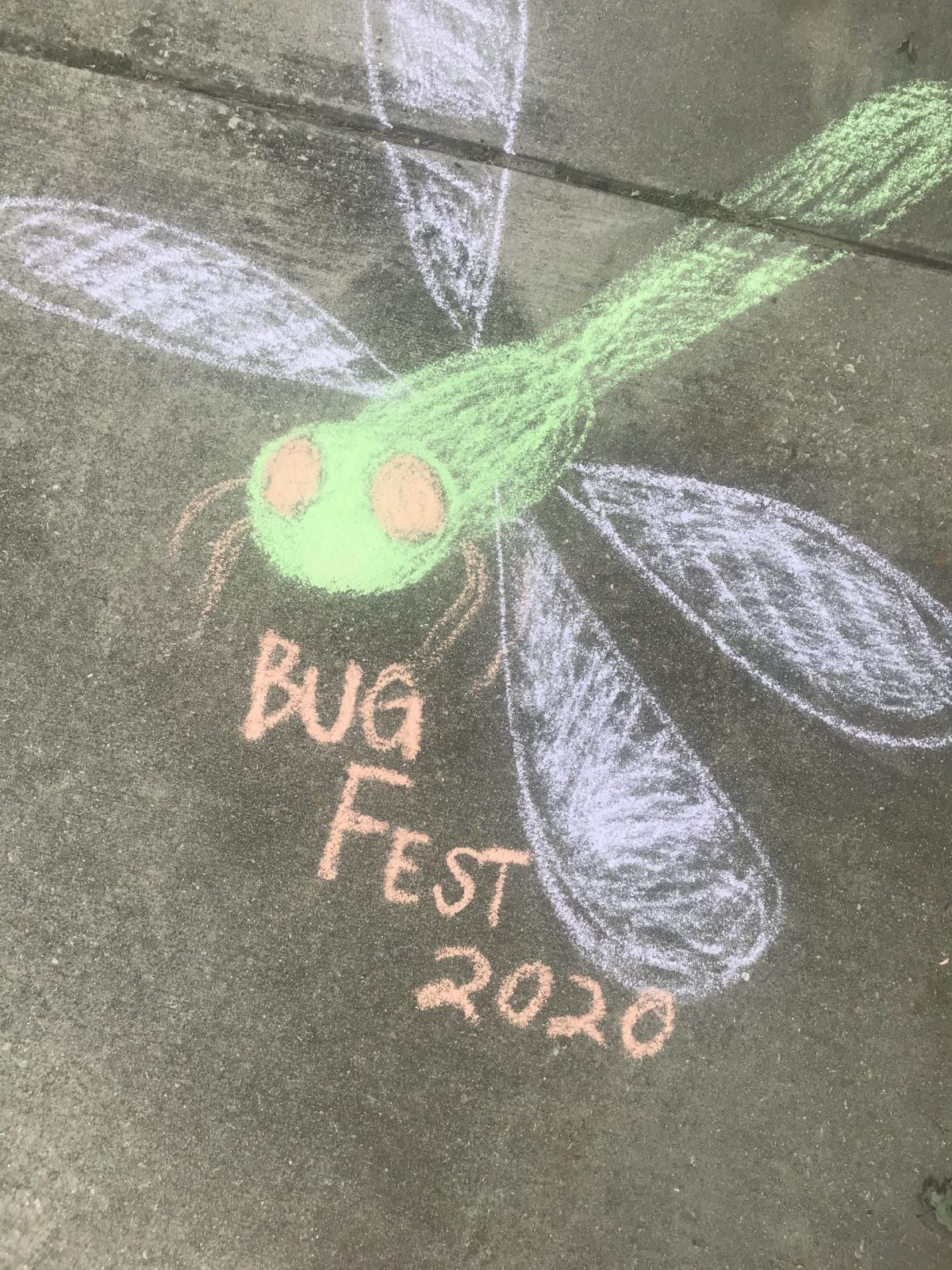 chalk bugfest 2020 and a green dragonfly