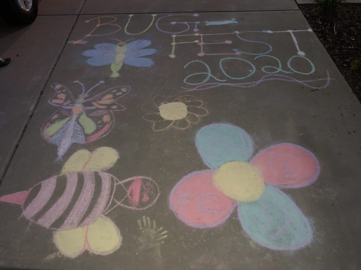 BugFest 2020 in chalk with bugs and flowers