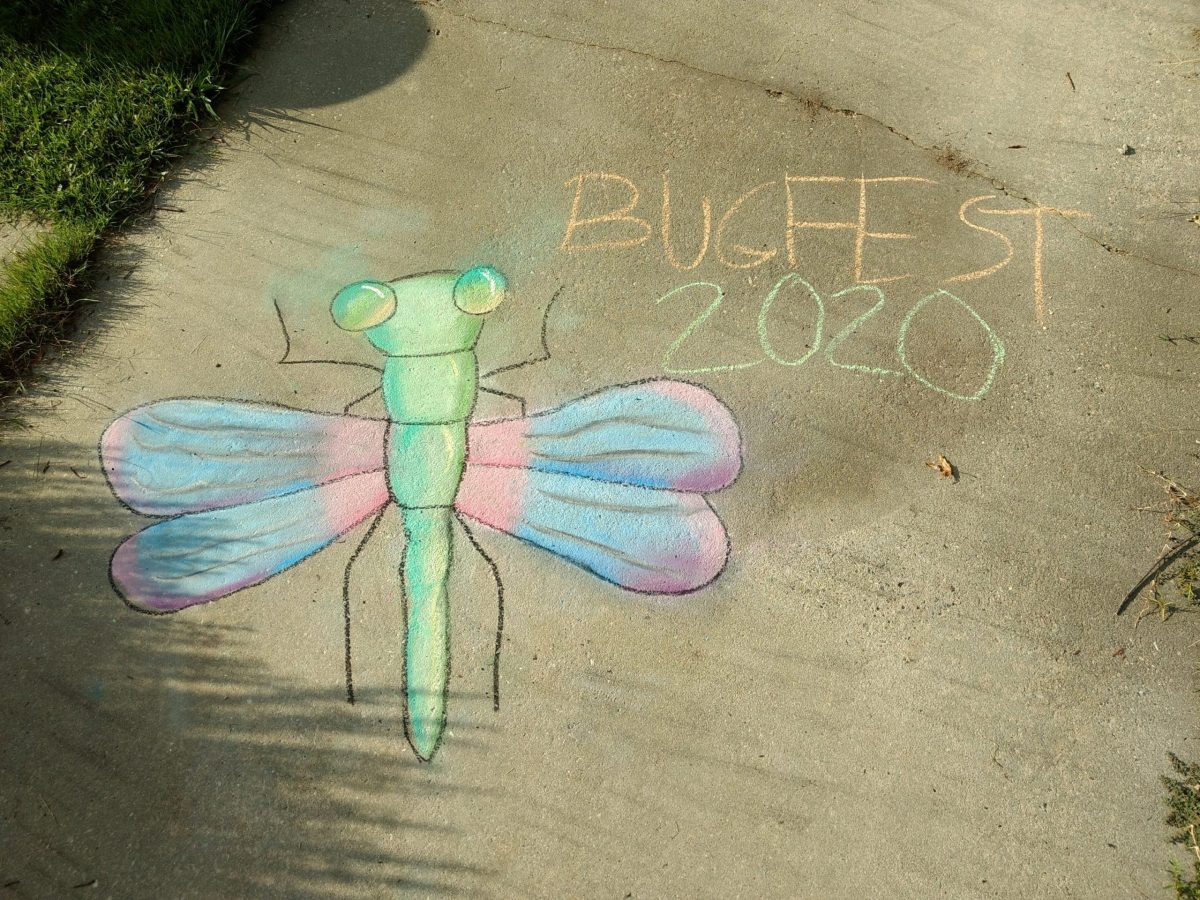 a beautiful pastel bugfest dragonfly