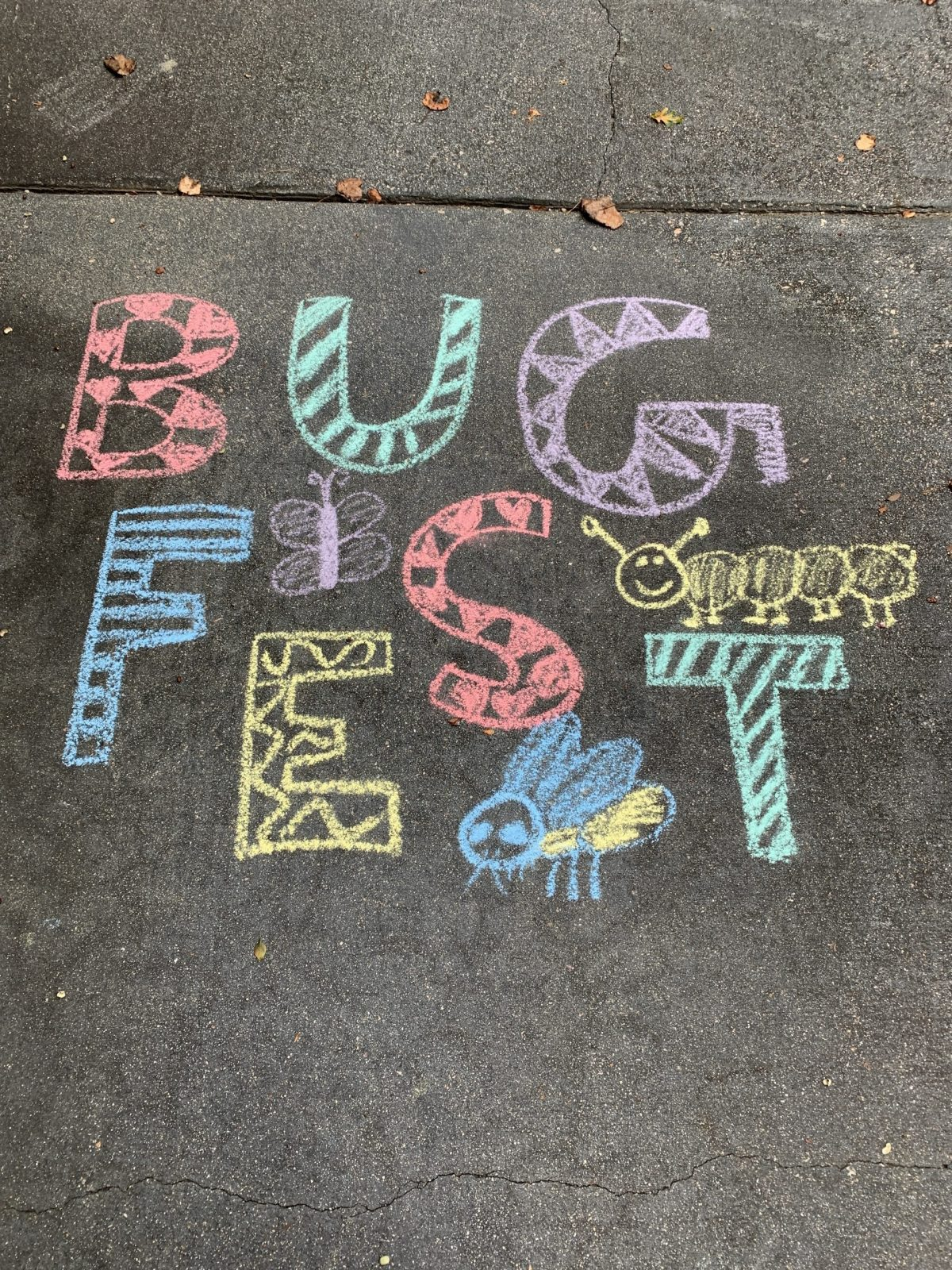 Fun chalk bugfest letters and a couple of bugs