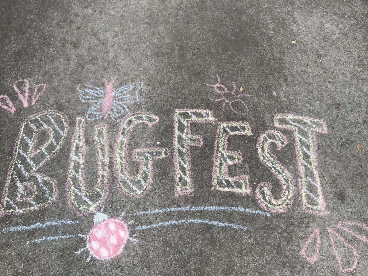 Chalk BugFest in pink stripey letters