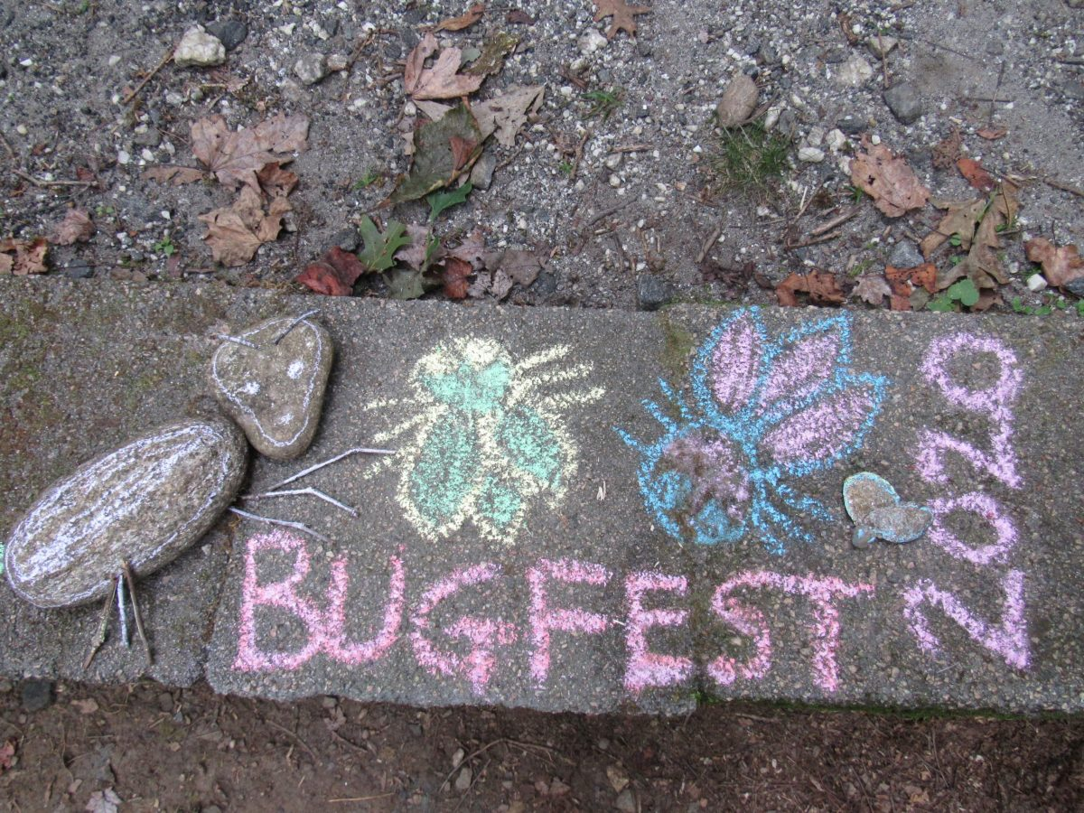 BugFest with flies and stones