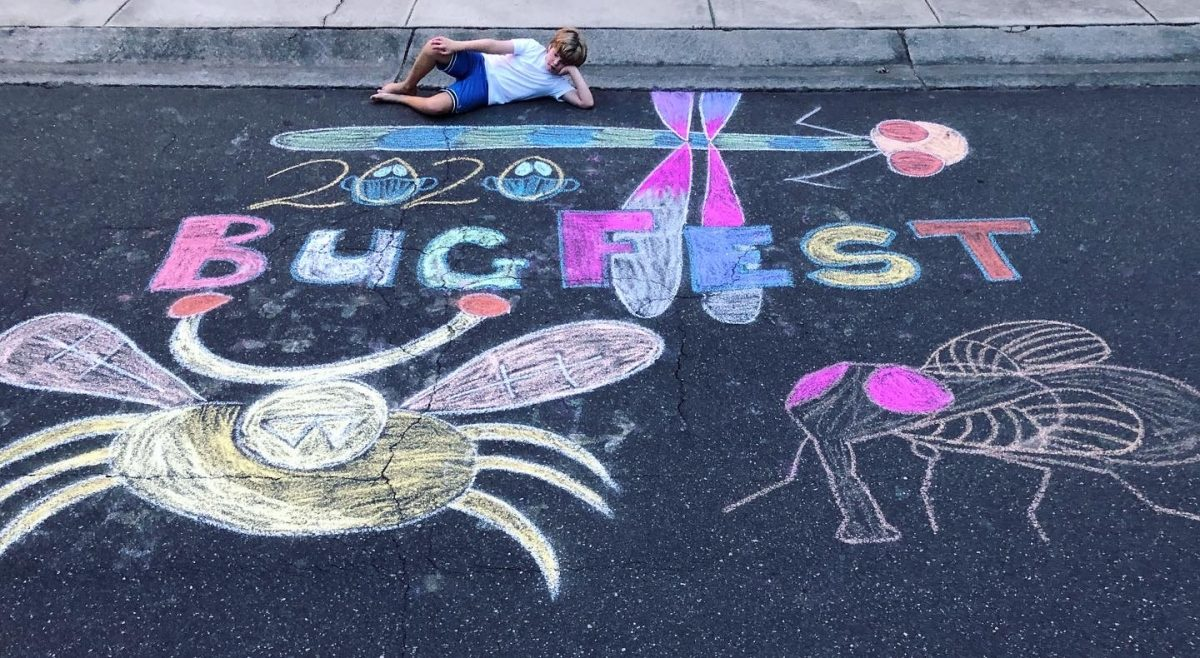 A boy with chalk bugfest and some big bugs