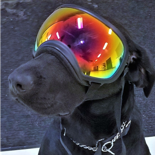 A black dog with ski goggles