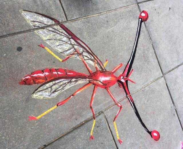 stalk-eyed fly in chalk