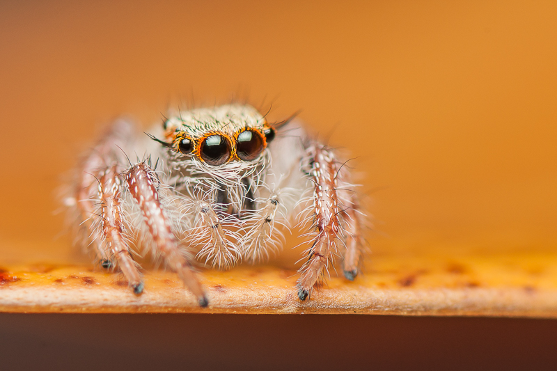 Natural Science Classroom Thankful for Spiders