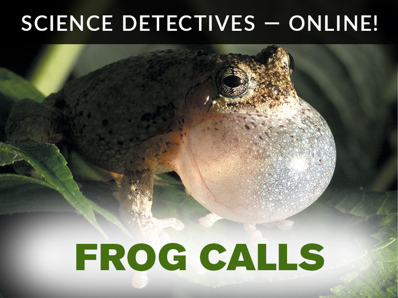 Science Detectives Frog Calls