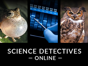 Science Detectives Online - November