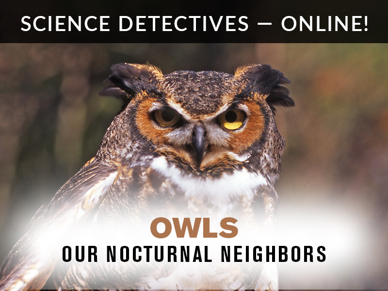 Science Detectives Owls