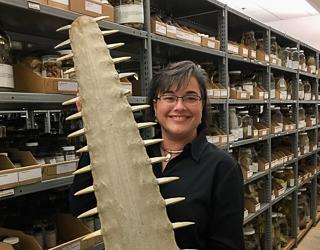 Gabriela Hogue holding a sawfish's saw.