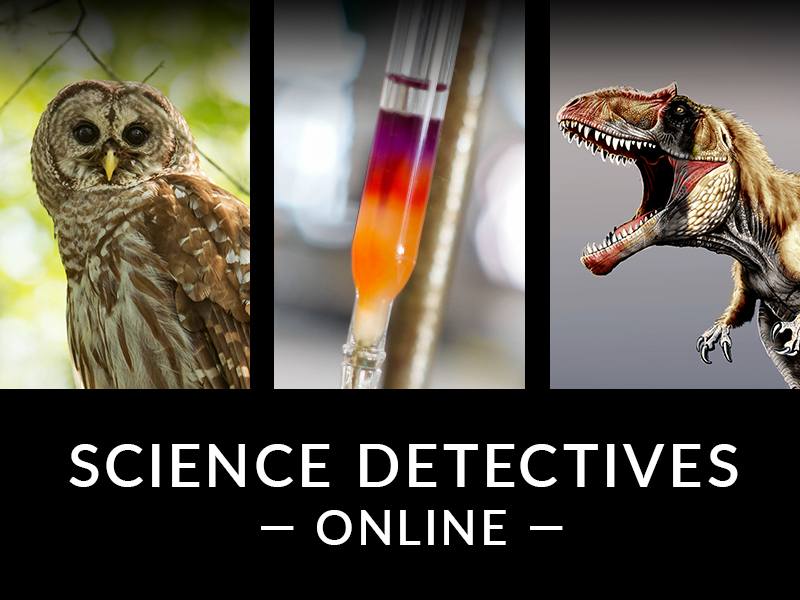 Science Detectives Online FAQ December 2020