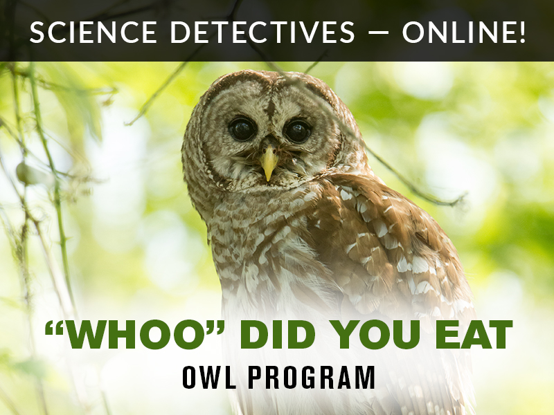 Science Detectives Online Owls Whoo Did You Eat