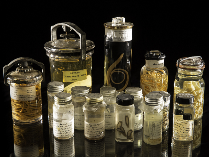 15 antique jars filled with parasites