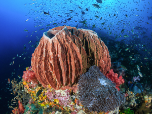 Ask a Naturalist: Sponge Blog