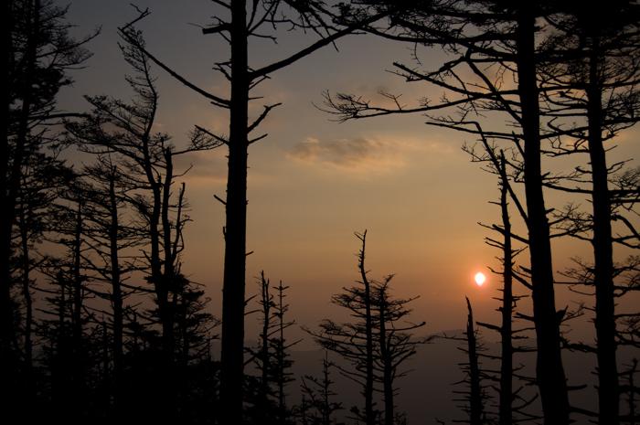 Mountain sunset through a grove of spruce trees. Photo: Melissa Dowland/NCMNS