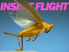 Insect Flight video