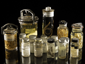 15 antique jars filled with parasites. Photo: Paul Fetters for the Smithsonian Institution.