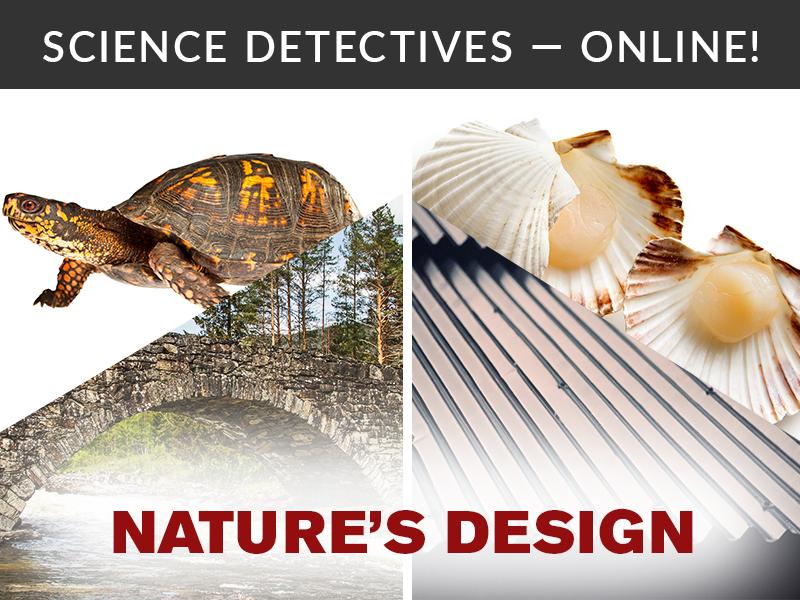 Science Detectives Online Nature's Design