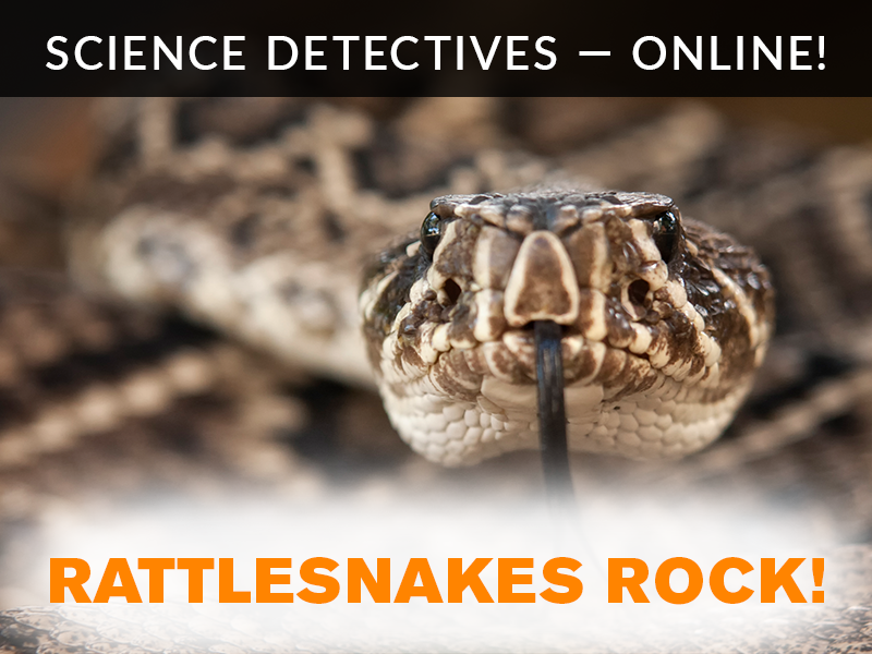 Science Detectives Online Rattlesnake