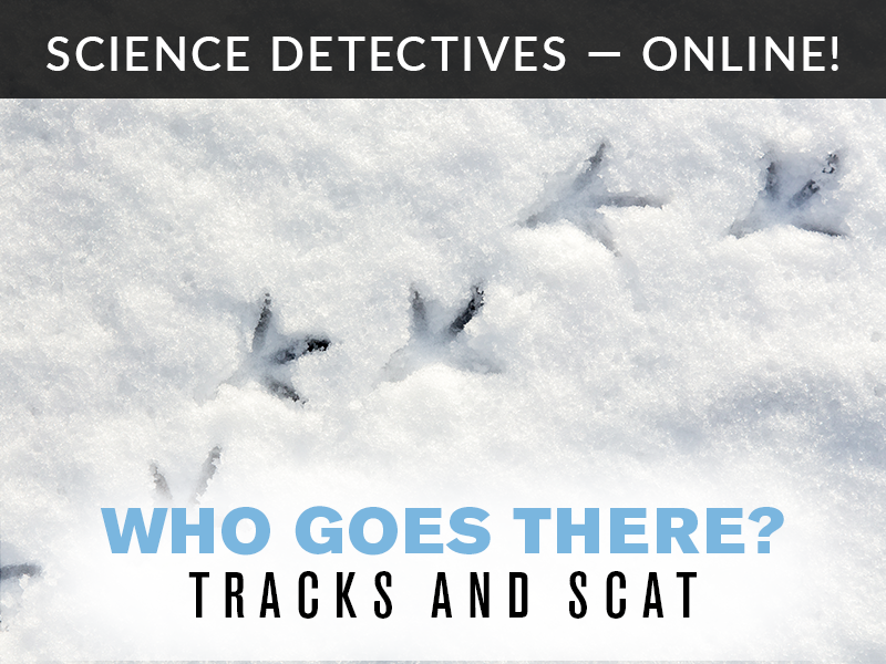Science Detectives Online Tracks and Scat