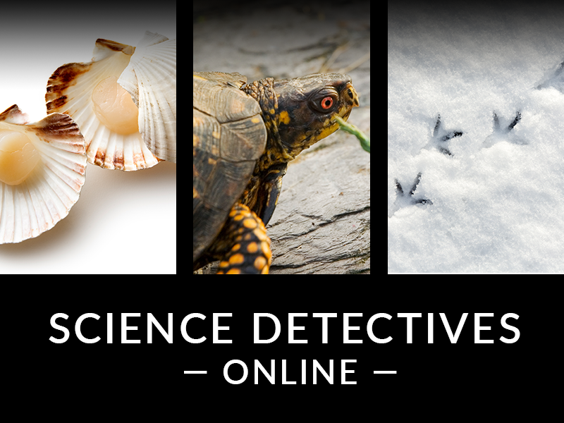 Science Detectives Online Thumbnail