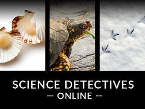Science Detectives Online