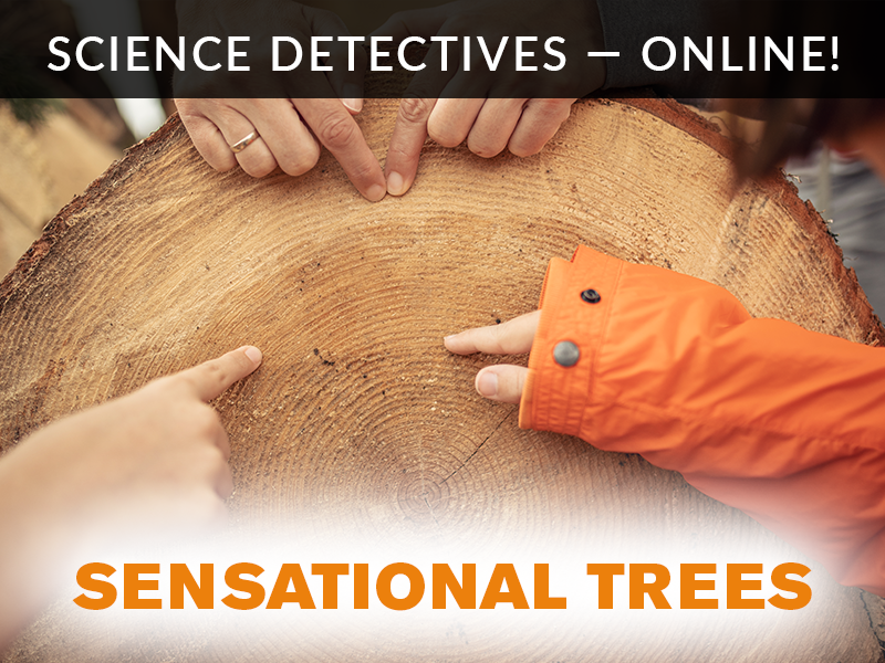 Science Detectives Online Trees