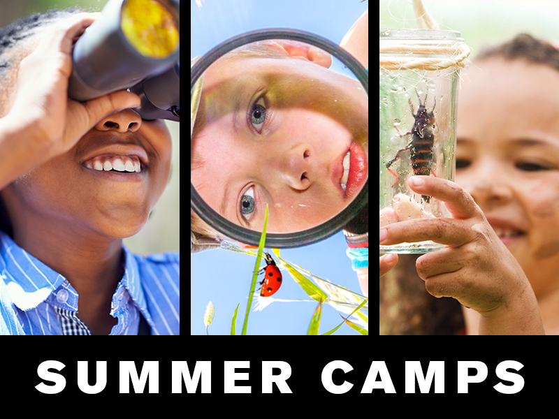 Summer Camps: teen looking through binoculars; boy looking through magnifying glass at ladybug; girl looking at insect in jar.