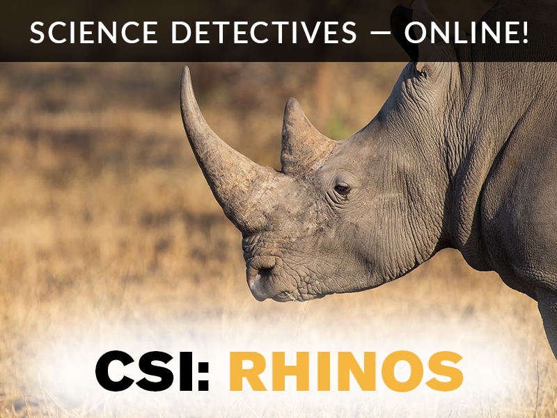 Science Detectives – Online! – CSI: Rhinos Programs and Events
