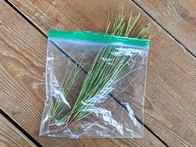 Pine needles in Ziploc bag.
