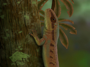 One in a million: Kammerer's lucky break leads to new species discovery