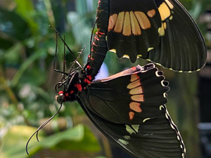 Love is in the Air – in the Living Conservatory