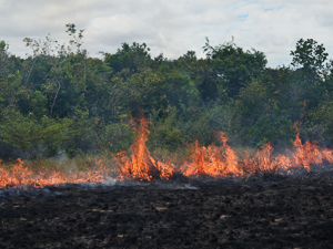 Museum ornithologist assists with Guyana fire and wildlife study