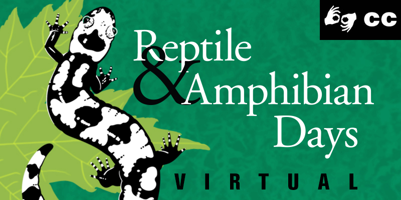 Virtual Reptile & Amphibian Days