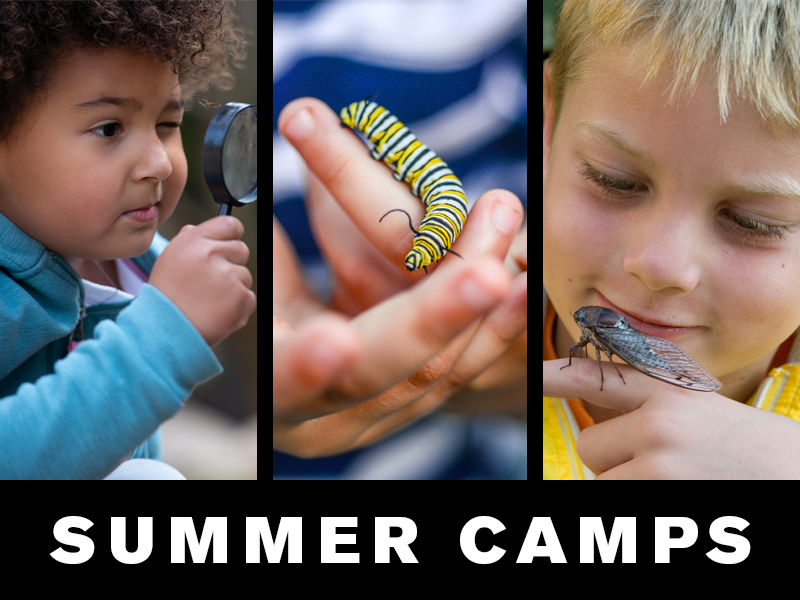 Summer Camps: Little girl looking through magnifying glass; child holding monarch butterfly caterpillar; boy holding cicada