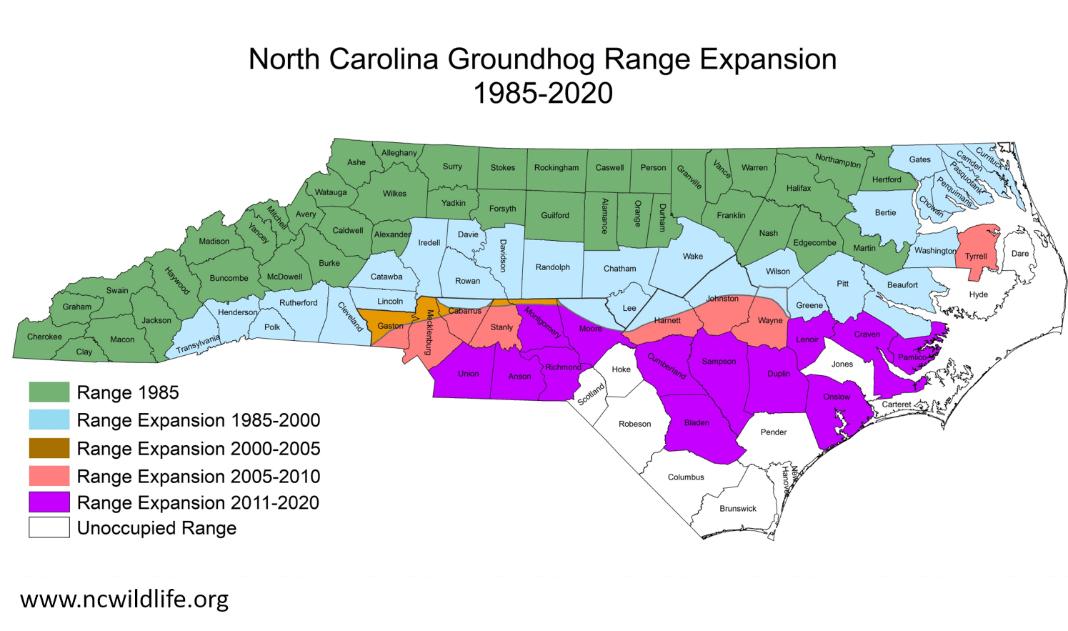 Groundhog range expansion map for NC