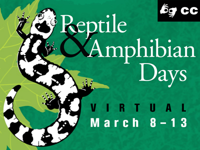 Celebrate salamanders and more during virtual Reptile and Amphibian Days, March 8-13