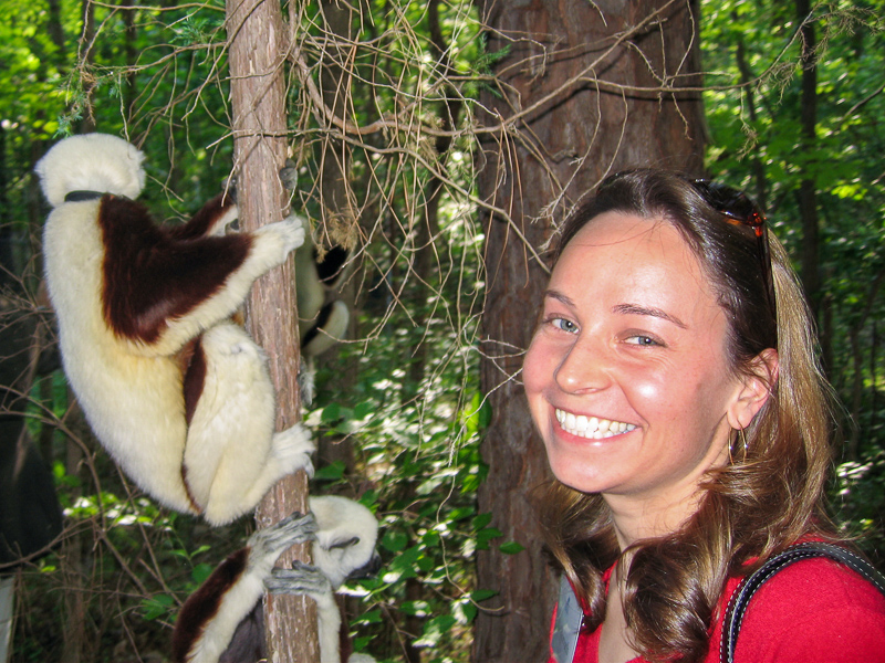 Julie with Coquerel's Sifakas at the Duke Lemur Center.