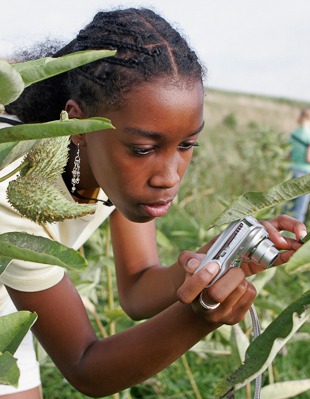 A girl taking a photo of a monarch caterpillar on milkweed.
