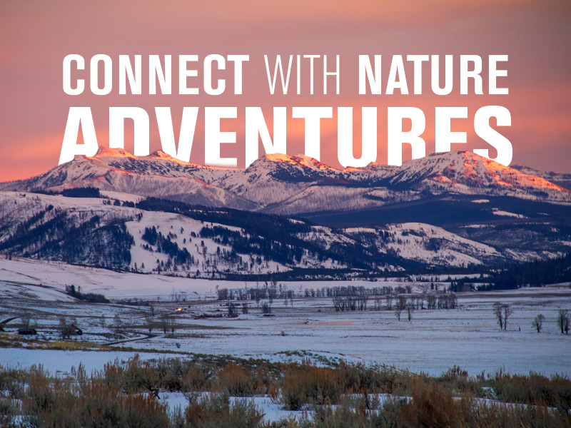 Connect With Nature Adventures - Mountain sunset in Yellowstone