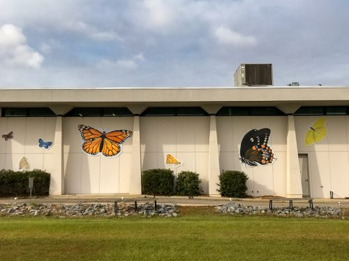 The Butterflies of NC Museum of Natural Sciences at Whiteville