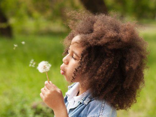 Nature Now! The Dandelion