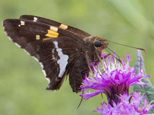 Butterflies and Moths: Differences Are Just Scale Deep
