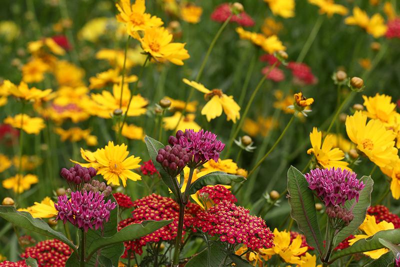 Assorted flowers blooming in the garden.